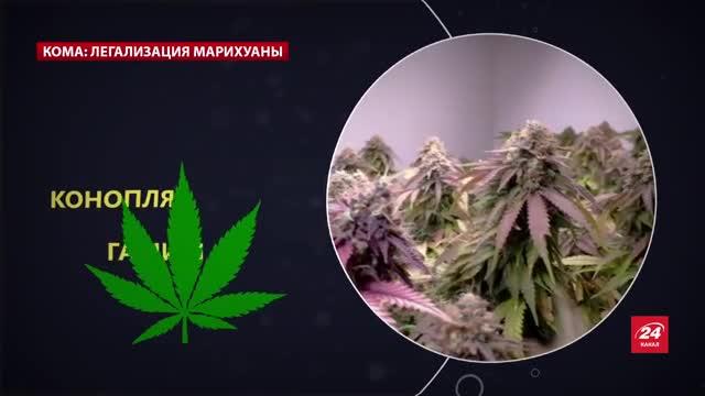 Сайт гашиш марихуана вредное влияние марихуаны на организм